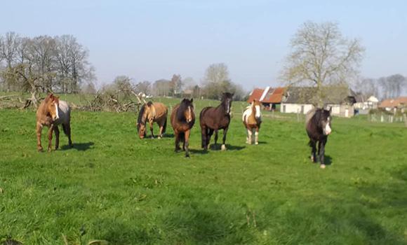 demi-pension chevaux